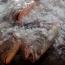 টাটকা মাছ কেনার ৭টি টিপস